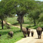 Tanzania Group Safari