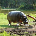 Budget Luxury Safari Tanzania