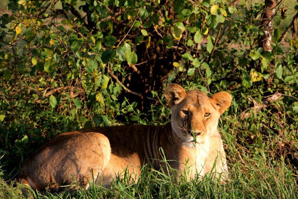 safari outdoor