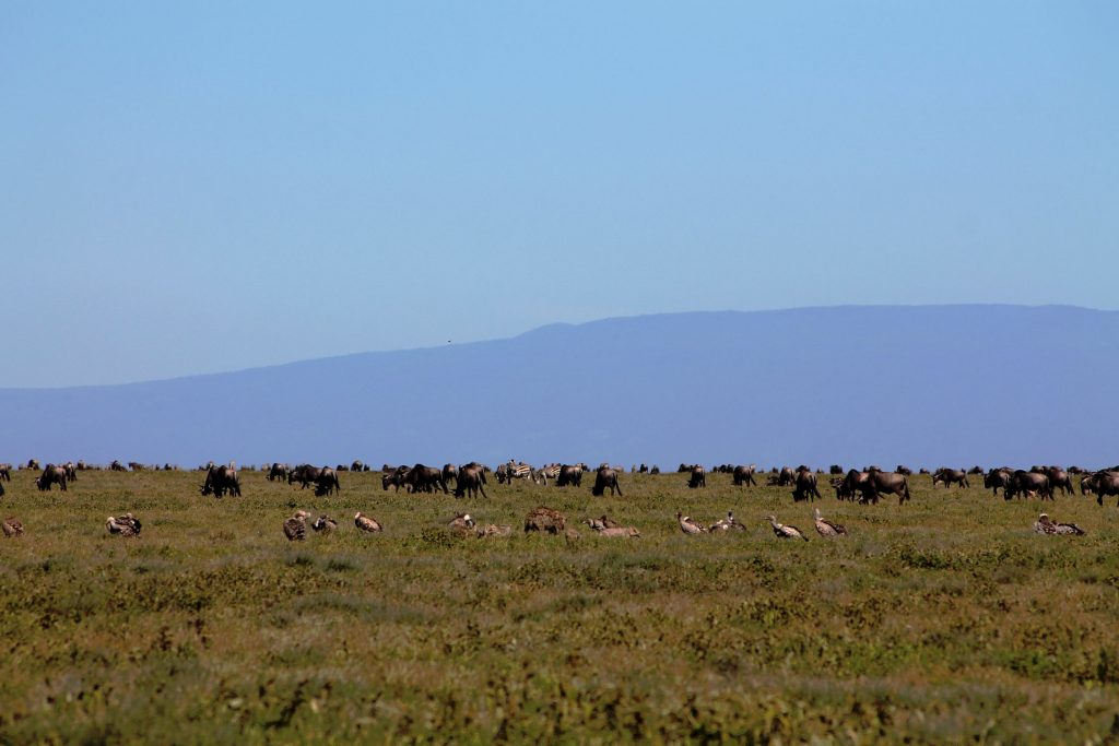 Mahale National Park