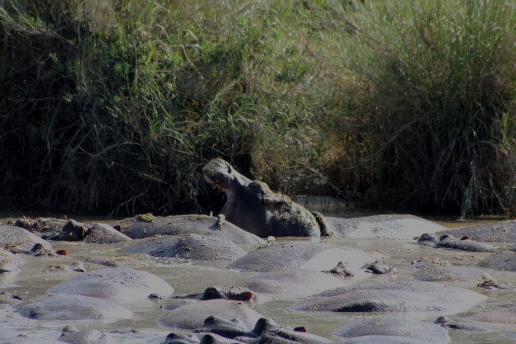 Katavi National Parks