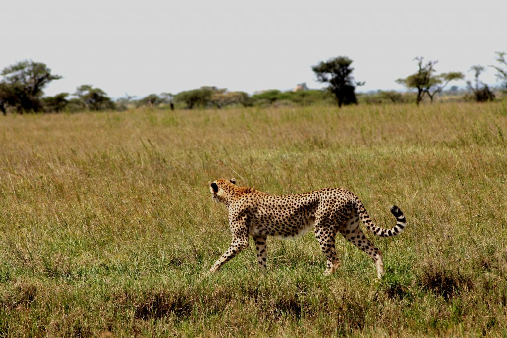 Reasons visiting Tanzania 2018