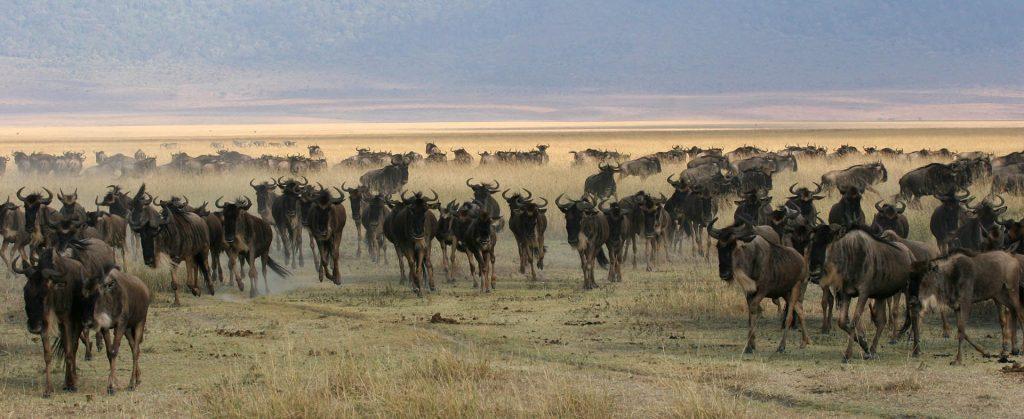 Safari to Tanzania